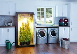 marijuana-kitchen