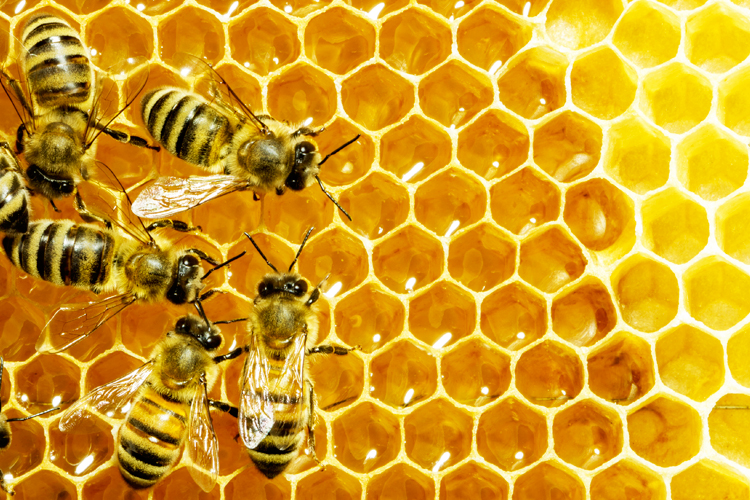 Will Fake Honey Save the Bees?